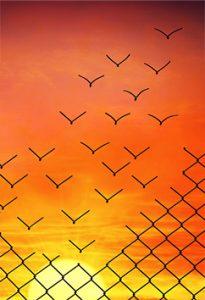 abstract flock of birds - orange sunset